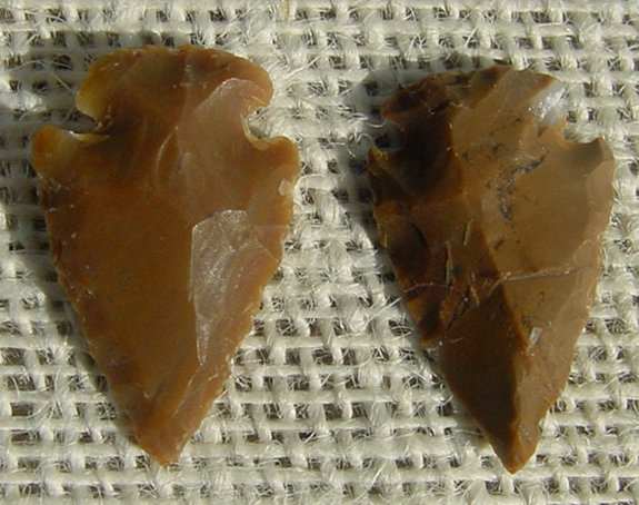 Brown Brownish Arrowheads